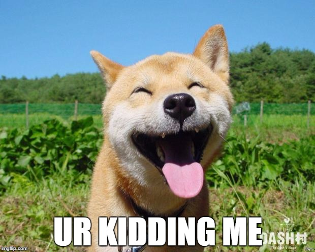 Happy Dog | UR KIDDING ME | image tagged in happy dog | made w/ Imgflip meme maker