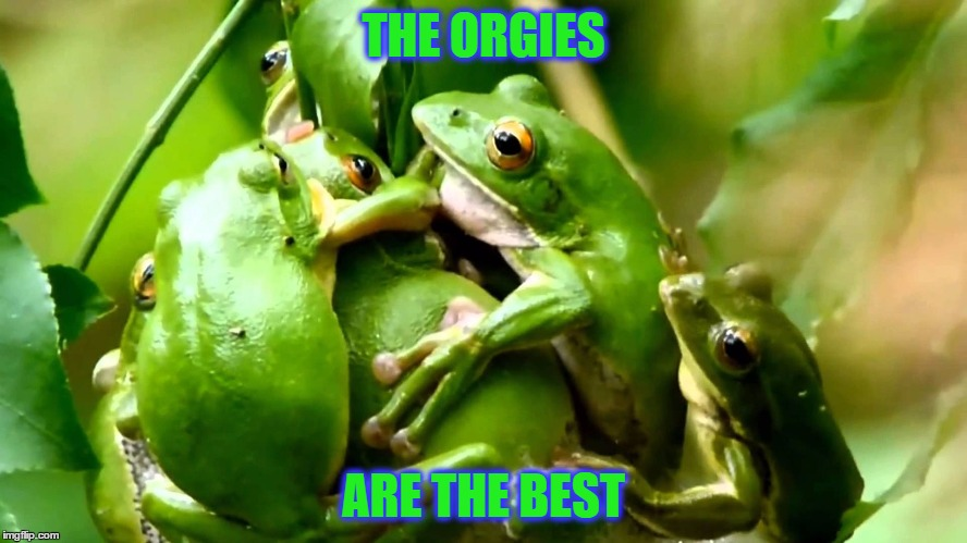THE ORGIES ARE THE BEST | made w/ Imgflip meme maker