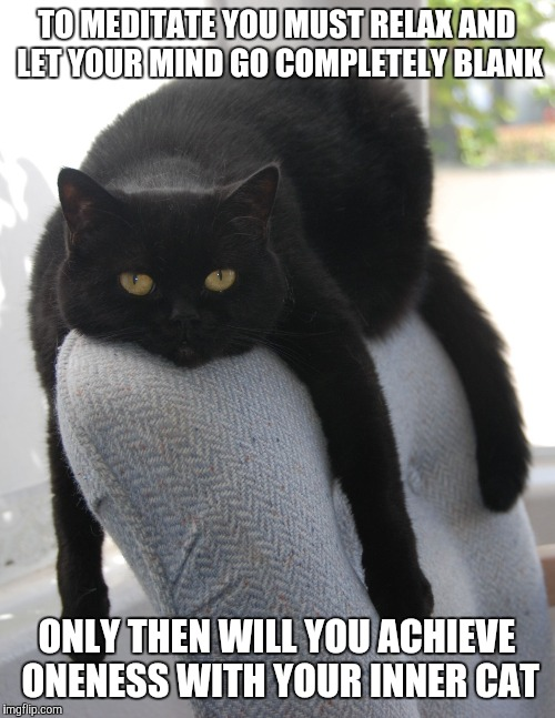 Draped Cat Be Like | TO MEDITATE YOU MUST RELAX AND LET YOUR MIND GO COMPLETELY BLANK ONLY THEN WILL YOU ACHIEVE ONENESS WITH YOUR INNER CAT | image tagged in black cat draped on chair,draped cat,meditate,achieve oneness with your inner cat,memes,funny | made w/ Imgflip meme maker