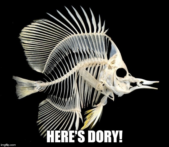 HERE'S DORY! | made w/ Imgflip meme maker