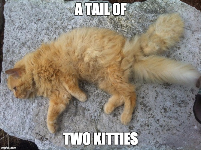 2 tails, 1 cat or a fairy tail or charles kittens or not bad pun dog... so many terrible puns |  A TAIL OF; TWO KITTIES | image tagged in cattail,memes,fairy tail,charles dickens,bad pun dog,bad pun | made w/ Imgflip meme maker