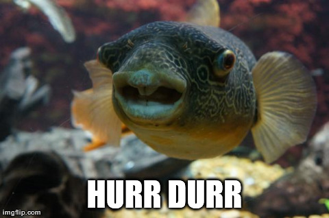 HURR DURR | image tagged in witty the fish,AdviceAnimals | made w/ Imgflip meme maker