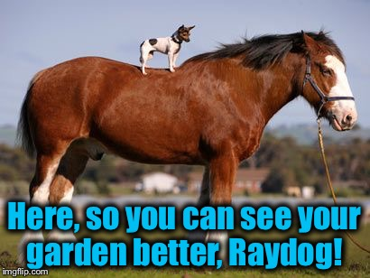 Here, so you can see your garden better, Raydog! | made w/ Imgflip meme maker