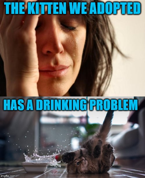 1st world problems trickle down.  | THE KITTEN WE ADOPTED HAS A DRINKING PROBLEM | image tagged in memes,cats,funny,1st world problems | made w/ Imgflip meme maker