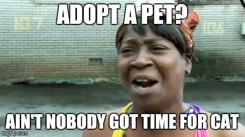 Aint Nobody Got Time For That Meme | ADOPT A PET? AIN'T NOBODY GOT TIME FOR CAT | image tagged in memes,aint nobody got time for that | made w/ Imgflip meme maker