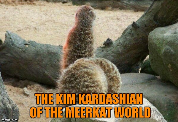 Even the wild has it's share of socialites. | THE KIM KARDASHIAN OF THE MEERKAT WORLD | image tagged in meerkat kim kardashian,memes,funny meerkats,animals,meerkats,funny animals | made w/ Imgflip meme maker