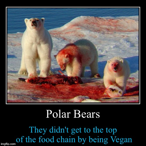 Why am I picking on Vegans?  Because they are there.....it's just business...nothing personal..... | Polar Bears | They didn't get to the top  of the food chain by being Vegan | image tagged in funny,demotivationals,funny memes,front page,evilmandoevil | made w/ Imgflip demotivational maker