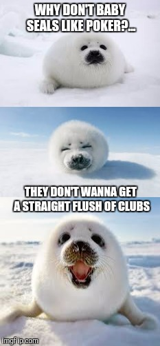 One more for the bad pun selections | WHY DON'T BABY SEALS LIKE POKER?... THEY DON'T WANNA GET A STRAIGHT FLUSH OF CLUBS | image tagged in sewmyeyesshut,funny memes,bad pun seal | made w/ Imgflip meme maker