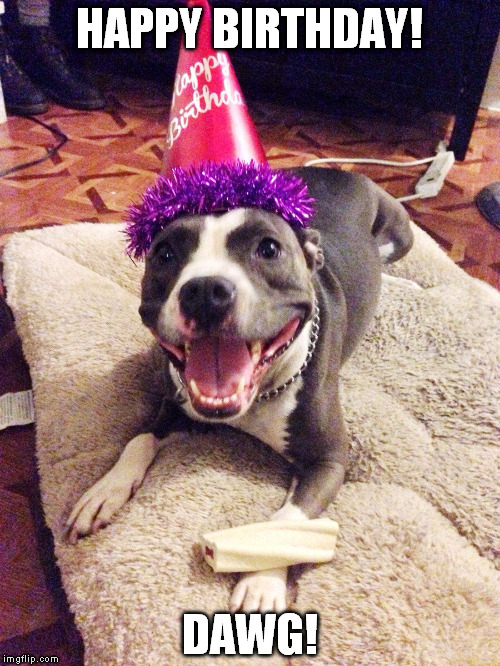 Image result for happy birthday pitbull cute