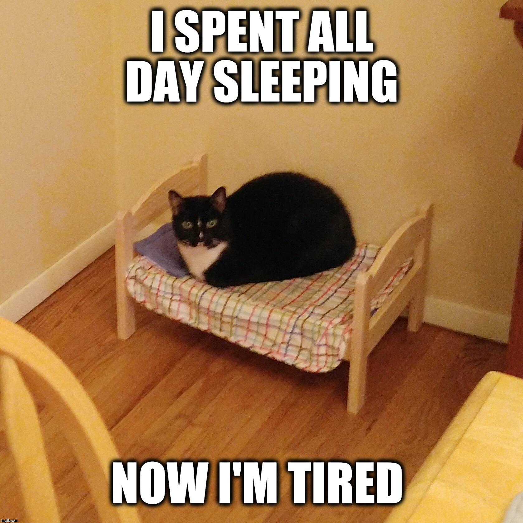 Sleepy cat  | I SPENT ALL DAY SLEEPING NOW I'M TIRED | image tagged in bert the cat,sleepy cat,bed,sleepy,funny cat memes,funny memes | made w/ Imgflip meme maker