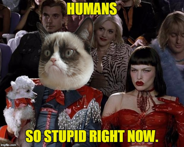 Grumpy Cat So Hot Right Now | HUMANS SO STUPID RIGHT NOW. | image tagged in memes,mugatu so hot right now,grumpy cat,humans,stupid,funny | made w/ Imgflip meme maker