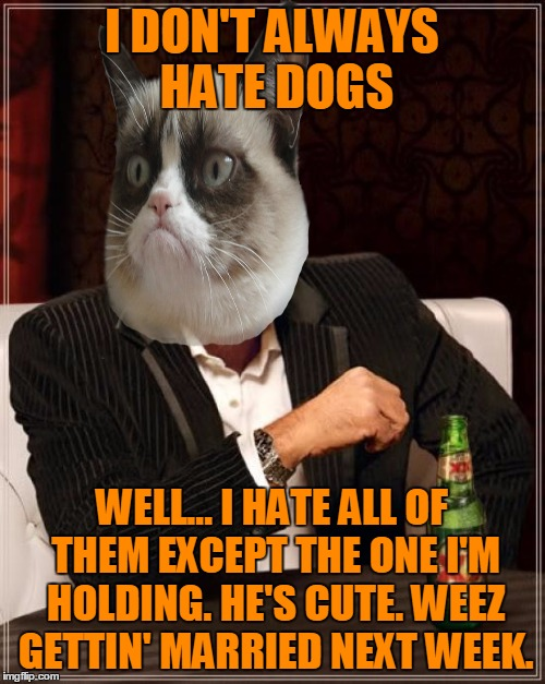The Most Interesting Man In The World Meme | I DON'T ALWAYS HATE DOGS WELL... I HATE ALL OF THEM EXCEPT THE ONE I'M HOLDING. HE'S CUTE. WEEZ GETTIN' MARRIED NEXT WEEK. | image tagged in memes,the most interesting man in the world | made w/ Imgflip meme maker