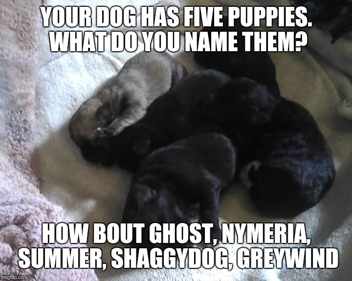 Wolves of Winter | YOUR DOG HAS FIVE PUPPIES. WHAT DO YOU NAME THEM? HOW BOUT GHOST, NYMERIA, SUMMER, SHAGGYDOG, GREYWIND | image tagged in game of thrones,dogs,asoiaf,animals,cute animals | made w/ Imgflip meme maker
