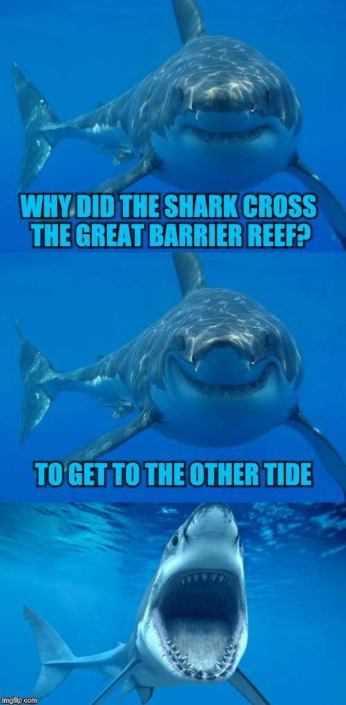Bad Shark Pun  | WHY DID THE SHARK CROSS THE GREAT BARRIER REEF? TO GET TO THE OTHER TIDE | image tagged in bad shark pun,shark week,funny meme,jokes,tide,ocean | made w/ Imgflip meme maker