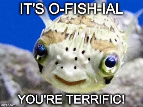 No worm necessary imgflip for Fish 2 flirt