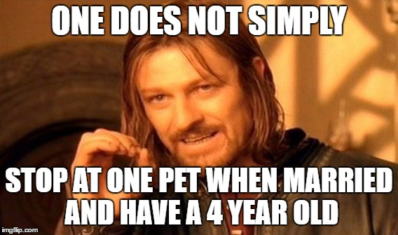 One Does Not Simply Meme | ONE DOES NOT SIMPLY STOP AT ONE PET WHEN MARRIED AND HAVE A 4 YEAR OLD | image tagged in memes,one does not simply | made w/ Imgflip meme maker