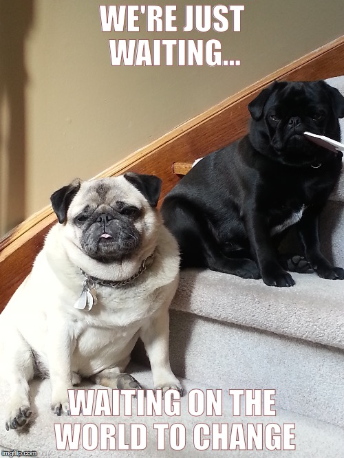 pugs-a-waiting | WE'RE JUST WAITING... WAITING ON THE WORLD TO CHANGE | image tagged in pug,gomez,stella,waiting on the world to change | made w/ Imgflip meme maker