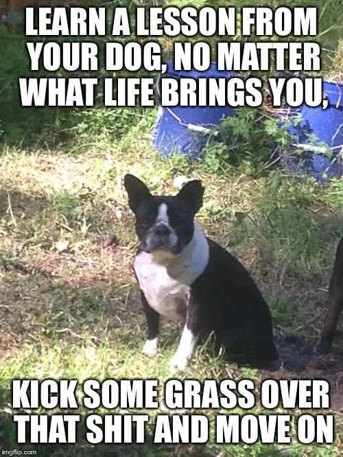 LEARN A LESSON FROM YOUR DOG, NO MATTER WHAT LIFE BRINGS YOU, KICK SOME GRASS OVER THAT SHIT AND MOVE ON | image tagged in boston terrier | made w/ Imgflip meme maker