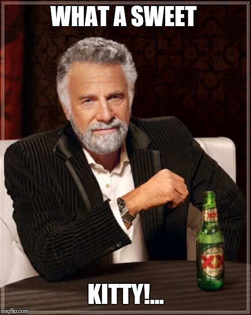 The Most Interesting Man In The World Meme | WHAT A SWEET KITTY!... | image tagged in memes,the most interesting man in the world | made w/ Imgflip meme maker