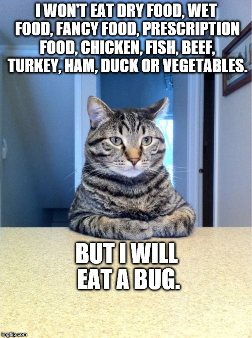 Take A Seat Cat Meme | I WON'T EAT DRY FOOD, WET FOOD, FANCY FOOD, PRESCRIPTION FOOD, CHICKEN, FISH, BEEF, TURKEY, HAM, DUCK OR VEGETABLES. BUT I WILL EAT A BUG. | image tagged in memes,take a seat cat | made w/ Imgflip meme maker
