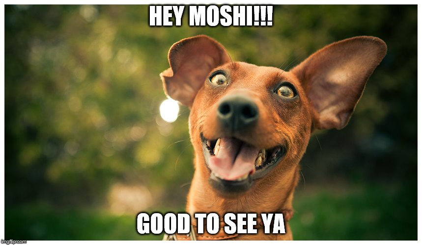 crazy mutt | HEY MOSHI!!! GOOD TO SEE YA | image tagged in crazy mutt | made w/ Imgflip meme maker