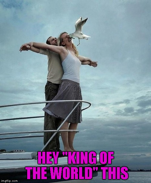 "I guess that seagull showed her what's up... | HEY ""KING OF THE WORLD"" THIS 