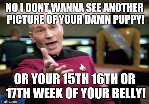 Picard Wtf Meme | NO I DONT WANNA SEE ANOTHER PICTURE OF YOUR DAMN PUPPY! OR YOUR 15TH 16TH OR 17TH WEEK OF YOUR BELLY! | image tagged in memes,picard wtf | made w/ Imgflip meme maker