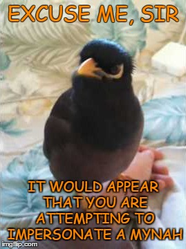 EXCUSE ME, SIR IT WOULD APPEAR THAT YOU ARE ATTEMPTING TO IMPERSONATE A MYNAH | made w/ Imgflip meme maker