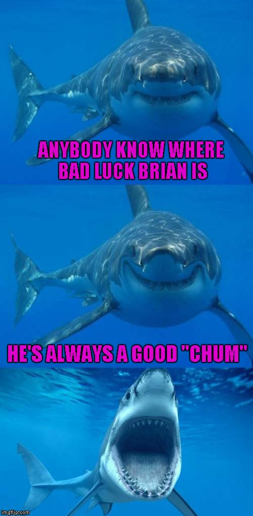 "Bad Shark Pun  | ANYBODY KNOW WHERE BAD LUCK BRIAN IS HE'S ALWAYS A GOOD ""CHUM"" 