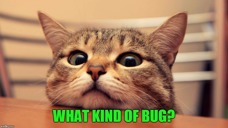 WHAT KIND OF BUG? | made w/ Imgflip meme maker