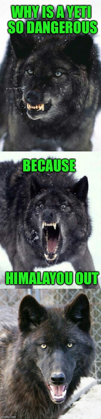 Winter is coming | WHY IS A YETI SO DANGEROUS BECAUSE HIMALAYOU OUT | image tagged in bad pun insanity wolf,memes,bad pun,yeti | made w/ Imgflip meme maker
