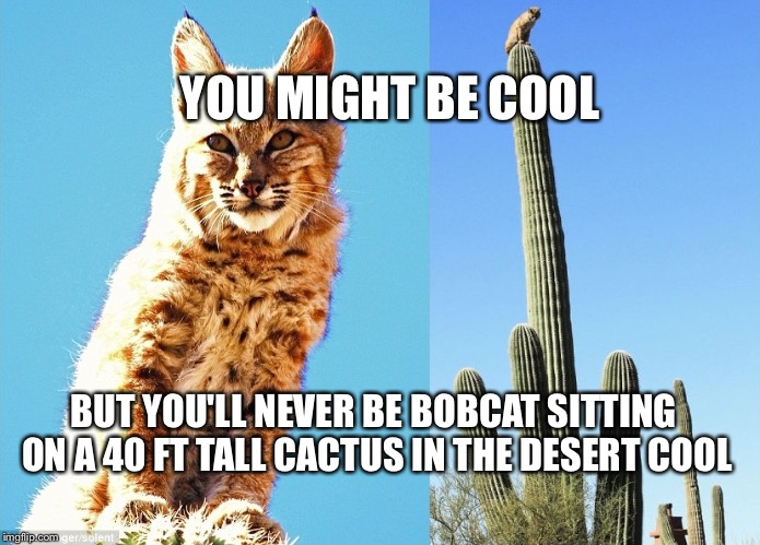 bobcat | YOU MIGHT BE COOL BUT YOU'LL NEVER BE BOBCAT SITTING ON A 40 FT TALL CACTUS IN THE DESERT COOL | image tagged in bobcat | made w/ Imgflip meme maker