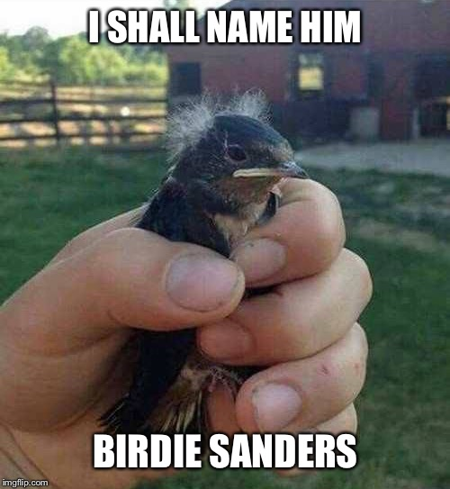 He does look a little like him... | I SHALL NAME HIM BIRDIE SANDERS | image tagged in memes,funny,bernie sanders,birds | made w/ Imgflip meme maker