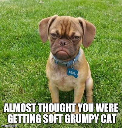 ALMOST THOUGHT YOU WERE GETTING SOFT GRUMPY CAT | made w/ Imgflip meme maker