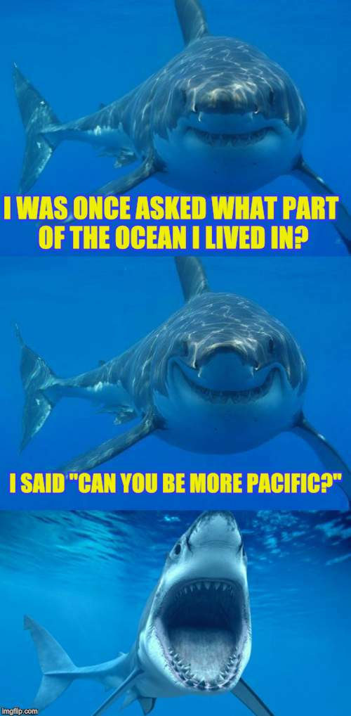 "Bad Shark Pun  |  I WAS ONCE ASKED WHAT PART OF THE OCEAN I LIVED IN? I SAID ""CAN YOU BE MORE PACIFIC?"" 