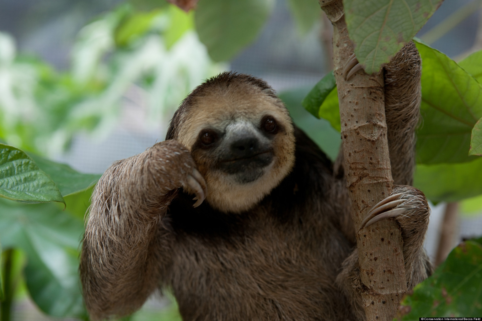 thinking sloth blank template imgflip