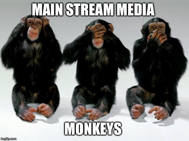 Monkeys Do | MAIN STREAM MEDIA MONKEYS | image tagged in monkeys,msm,cnn,nbc,political correctness,political meme | made w/ Imgflip meme maker
