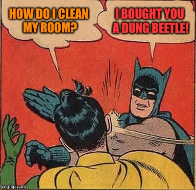 Batman Slapping Robin Meme | HOW DO I CLEAN MY ROOM? I BOUGHT YOU A DUNG BEETLE! | image tagged in memes,batman slapping robin | made w/ Imgflip meme maker