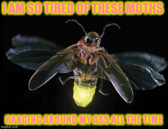 I AM SO TIRED OF THESE MOTHS HANGING AROUND MY ASS ALL THE TIME | made w/ Imgflip meme maker