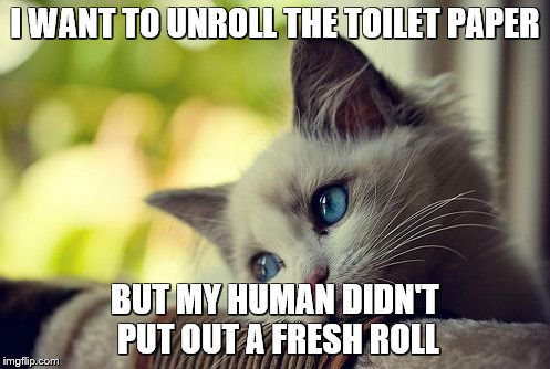 First World Problems Cat |  I WANT TO UNROLL THE TOILET PAPER; BUT MY HUMAN DIDN'T PUT OUT A FRESH ROLL | image tagged in memes,first world problems cat,cats,funny cats | made w/ Imgflip meme maker