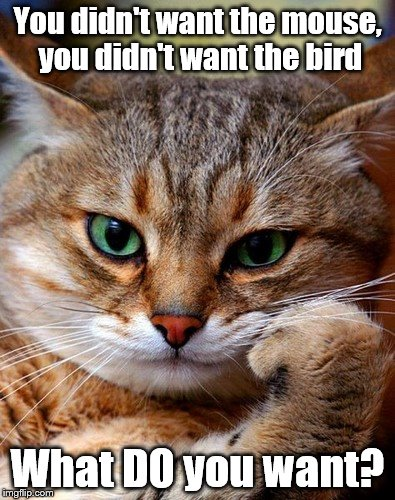 Some people are SO ungrateful... | You didn't want the mouse, you didn't want the bird What DO you want? | image tagged in memes,cats,animals,presents | made w/ Imgflip meme maker