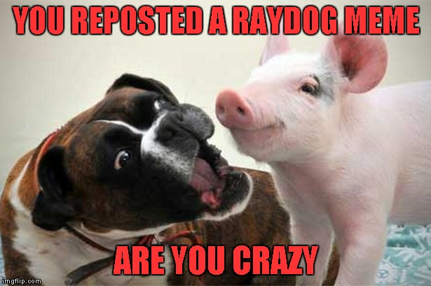 YOU REPOSTED A RAYDOG MEME ARE YOU CRAZY | made w/ Imgflip meme maker