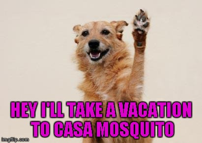 HEY I'LL TAKE A VACATION TO CASA MOSQUITO | made w/ Imgflip meme maker