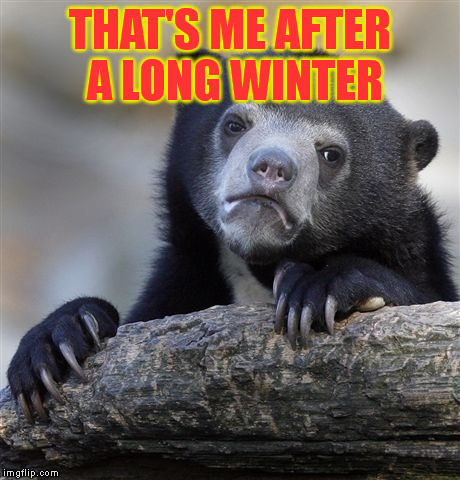 Confession Bear Meme | THAT'S ME AFTER A LONG WINTER | image tagged in memes,confession bear | made w/ Imgflip meme maker