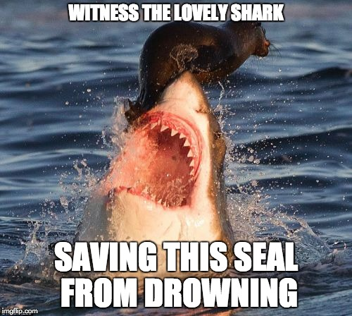 Travelonshark | WITNESS THE LOVELY SHARK SAVING THIS SEAL FROM DROWNING | image tagged in memes,travelonshark | made w/ Imgflip meme maker