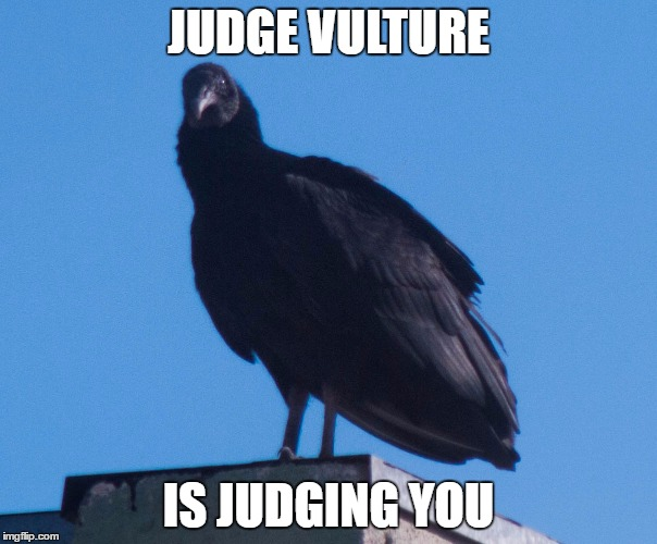 Judge Vulture | JUDGE VULTURE IS JUDGING YOU | image tagged in vulture,judge,bird,i will find you and kill you | made w/ Imgflip meme maker