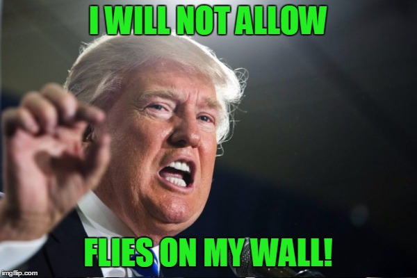 I WILL NOT ALLOW FLIES ON MY WALL! | made w/ Imgflip meme maker