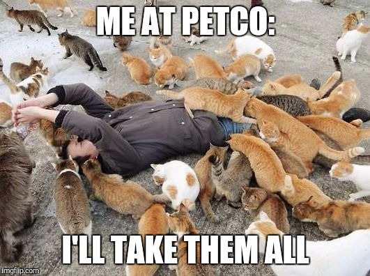 I almost came home with two new cats yesterday, but I barely have enough space for the two I already have.  |  ME AT PETCO:; I'LL TAKE THEM ALL | image tagged in cats,crazy cat lady,cat lady | made w/ Imgflip meme maker