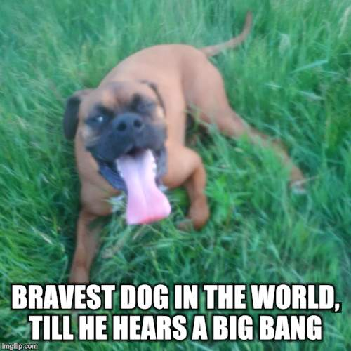 BRAVEST DOG IN THE WORLD, TILL HE HEARS A BIG BANG | made w/ Imgflip meme maker