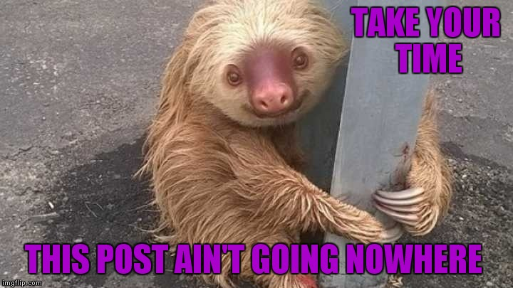 Not many know the struggle of trying to hit the cross walk button when you are a sloth... | TAKE YOUR TIME THIS POST AIN'T GOING NOWHERE | image tagged in sloth,post,funny,cute | made w/ Imgflip meme maker